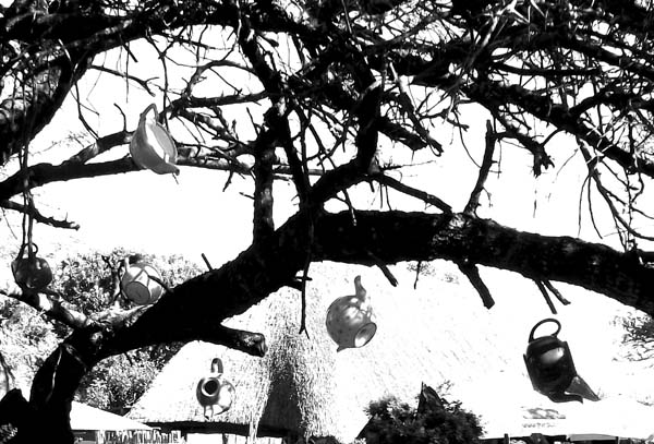 Teapots at Tea in the Trees