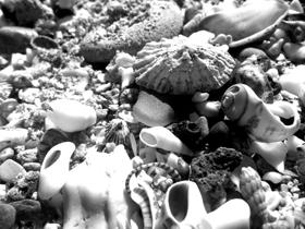 shells and shingle and sea glass