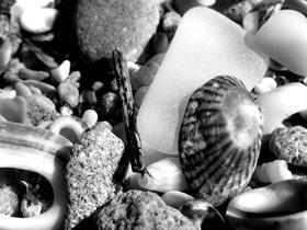white sea glass shells and shingle