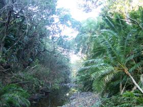 Inchara River at Yellowwood Forest
