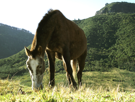 countryside horse outside Hogsback