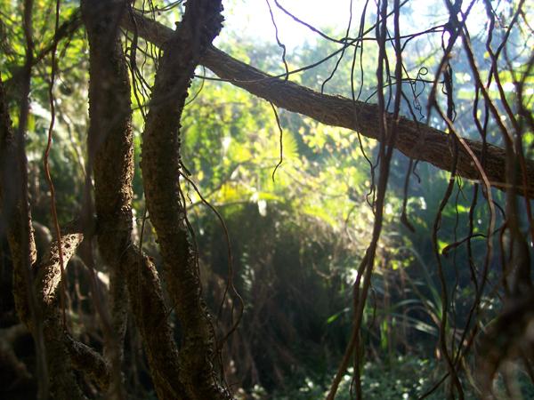 Lush vegetation in Morgan Bay