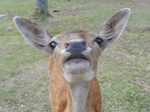 cute little buck thing at Areena Riverside Resort