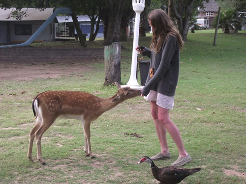 interacting with animals at Areena Riverside Resort